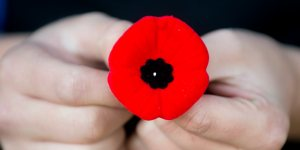 A young boy holds a Poppy in Montreal, Wednesday, November 7, 2012.  THE CANADIAN PRESS IMAGES/Graham Hughes.