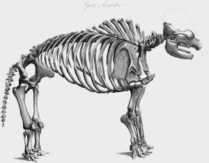 George Culver Mastodon Big Bone Lick Kentucky